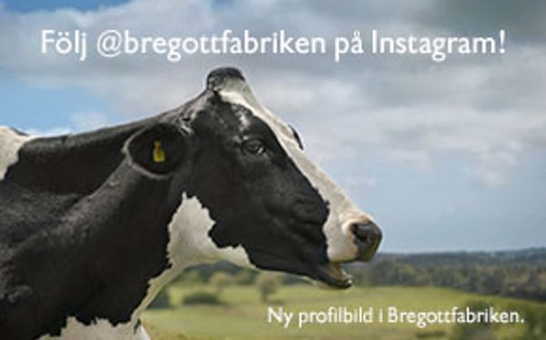 Follow Bregott on Instagram